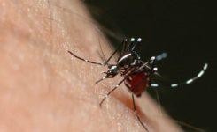 Quais os principais sintomas da dengue?